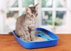 겨울철에는 고양이 방광과 요도질환에 주의해야 한다