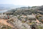 광양시, '멋진 봄 풍경 볼 수 있는 아시아 23곳' 에 선정
