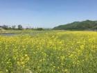 천안시, 풍서천 하천정비사업 완료…아름다운 하천 환경 조성
