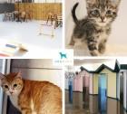 유기동물보호소 '도그마루', 고양이무료분양, 유기묘무료분양까지 건강한 무료입양으로 '각광'