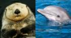 쳐다보는 순간 반하고 마는 세상에서 가장 귀여운 동물 10종