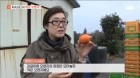 SBS모닝와이드, '클레멘타인 오렌지' 활용한 다양한 레시피 공개