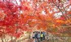 주말 가볼만한 축제,인천 힙합ㆍ남이섬 은행나무ㆍ금강철새여행등 힐링 행사 풍성