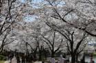 경주 '벚꽃축제' 초대