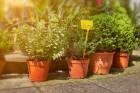 선물하기 좋은 식물 스투키