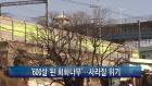 <부산>'600살 된 회화나무'...사라질 위기