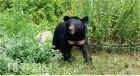 수도산에 온 반달가슴곰 KM-53과 함께 살아가기