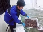 경북도, 바다의 팔방미인 어린해삼 방류한다