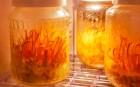 진시황도 즐겼다는 '동충하초', 강장과 빈혈 등에 좋은 효과 보여