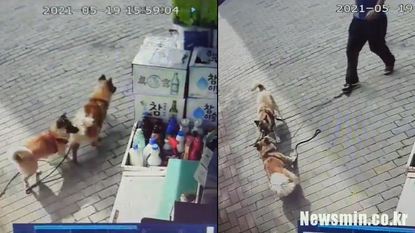 [노랭이가 죽었다(하)] 반려동물 기질평가 준비하는 정부